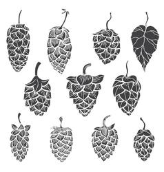 Set of Hops plant vector