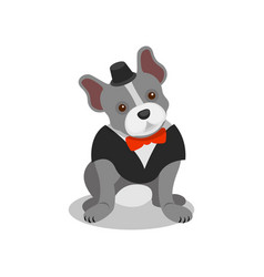 Boston terrier pedigree dog in black suit and bow vector