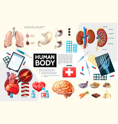 cartoon human body anatomy infographics vector image