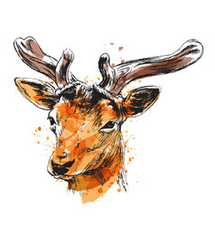 colored hand sketch of a young deer vector image