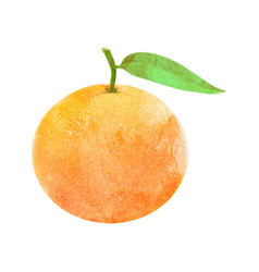 Watercolor mandarin fruit with leaf on white vector