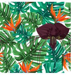 Dark purple tacca flower and strelizia background vector