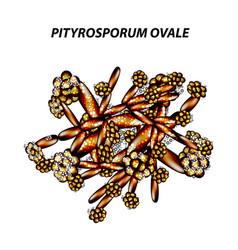 Fungal yeast pathogen seborrhea pityrosporum ovale vector