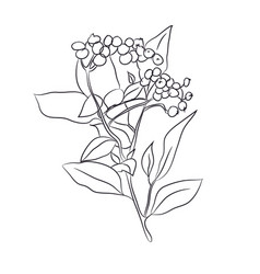 plant drawn in lines vector image