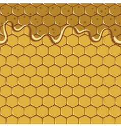 Seamless pattern of the honey and honeycomb vector