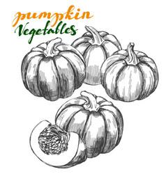 pumpkin vegetable set hand drawn vector image vector image