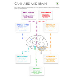 cannabis and brain vertical business infographic vector image