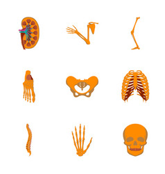 Icons set in flat style human bones vector