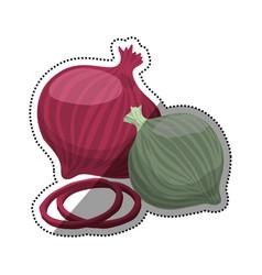 onions purple white slice vegetable vector image