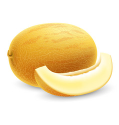ripe fresh honeydew melon vector image