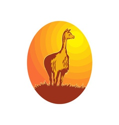 Vicuna standing with sun in background vector