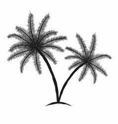 tropical palm trees with leaves black silhouettes vector image vector image
