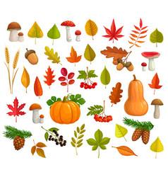 autumn icons cartoon leaves pumpkin set vector image