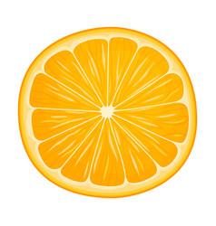 Half fresh mandarin or tangerine fruit isolated vector
