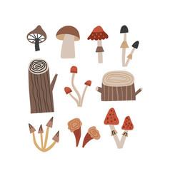hand drawn woodland types mushrooms and tree vector image