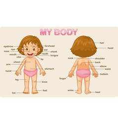 my body vector image