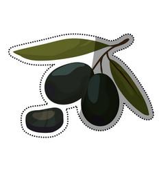 Olives leaf slice vegetable vector