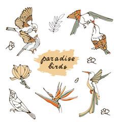Paradise birds set collection vector