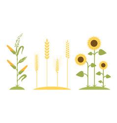 wheat field sunflower icon cartoon vector image vector image