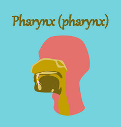 Human organ icon in flat style pharynx vector