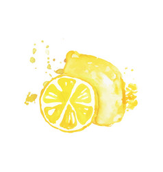 juicy ripe lemon fruit watercolor hand painting vector image