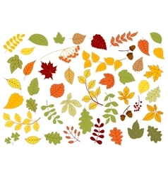 Maple oak birch linden and herbs leaves vector