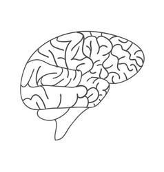 sketch ink human brain hand drawn anatomical vector image