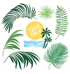 Tropic Collection tropical leaves set vector image