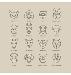 Head of dog and puppy set vector image