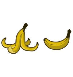 Banana peel cartoon color vector