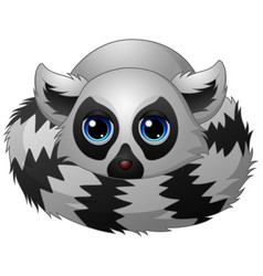 cartoon lemur laying down vector image