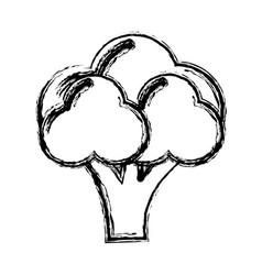 contour health broccoli vegetable icon vector image