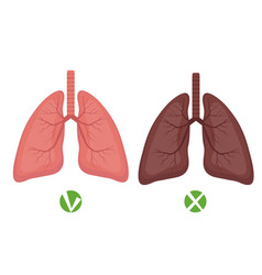 Healthy lungs and lungs disease or smoker vector