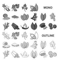 Herb and spices monochrom icons in set collection vector