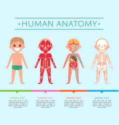 Human anatomy poster with child vector