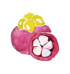 Juicy ripe mangosteen fruit watercolor hand vector