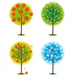 one tree in different seasons vector image