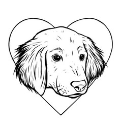 portrait labrador retriever vector image