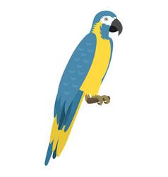 cartoon tropical parrot wild animal bird vector image