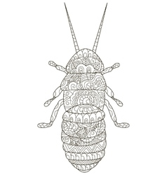 Beetle Coloring for adults vector