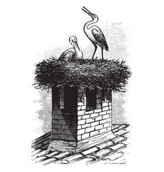 Stork nest products vintage engraving vector
