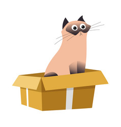 Cat in box siamese breed and cardboard container vector
