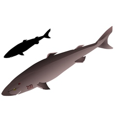 Greenland shark vector