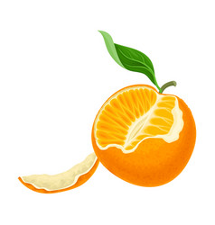 Half peeled mandarin or tangerine fruit with green vector
