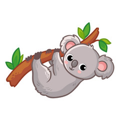 koala hangs on a tree on a white background cute vector image
