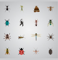 Realistic damselfly arachnid bee and other vector