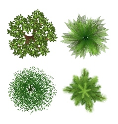 Top view trees vector