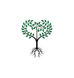 tree root logo vector image