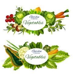 Vegetables mushrooms and salad leaves farm food vector