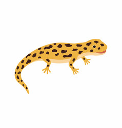 yellow lizard spotted salamander isolated on vector image